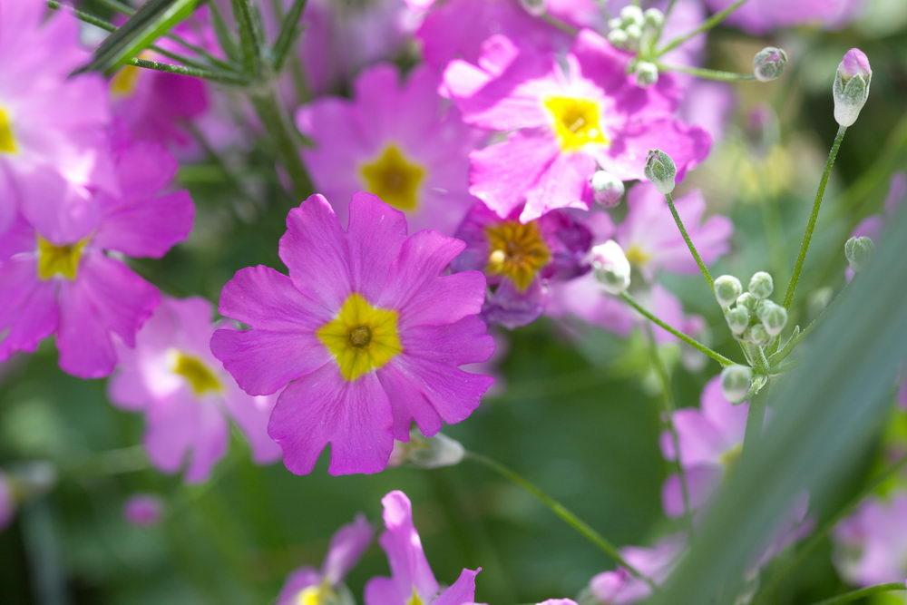 Blüte lila