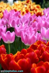 Osterbilder, Osterblumen