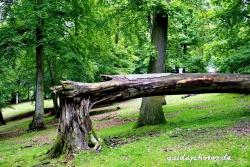 Wildpark Rolandseck
